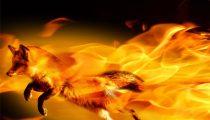 Firefox будет предупреждать о небезопасности HTTP – настойчиво, но без паники
