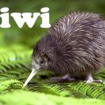 Домен .kiwi стремительно набирает регистрации