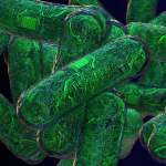 Ученые выращивают компьютер из живых клеток